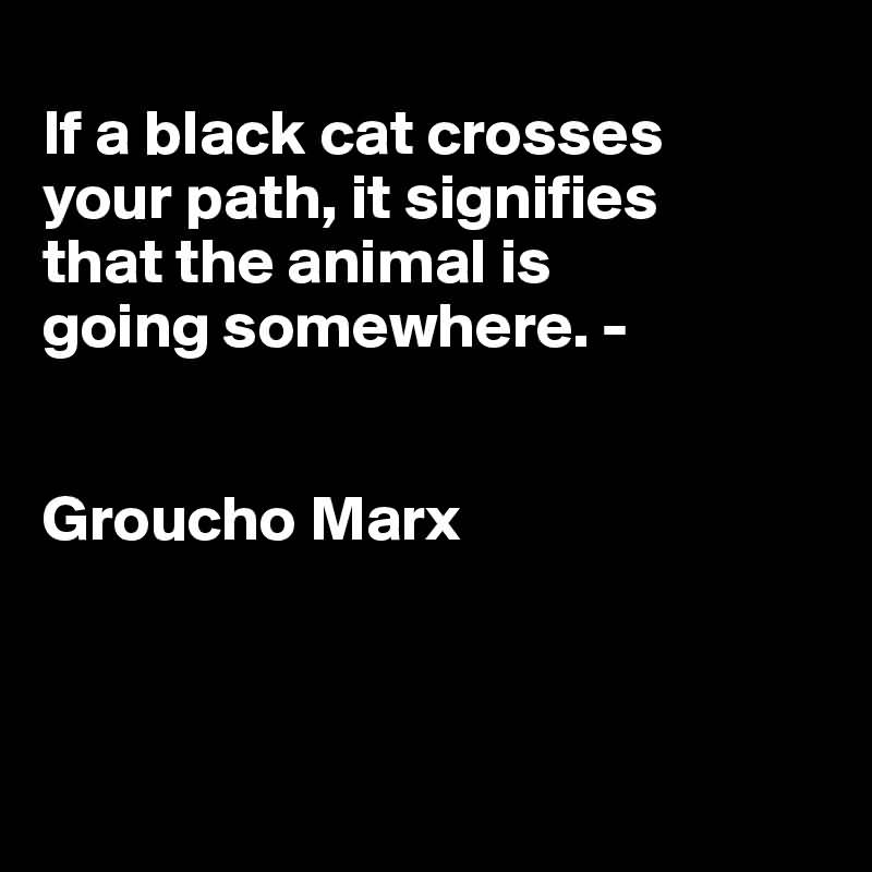 Animal Quotes A black cat crossing your path signifies that the animal is going somewhere. Groucho Marx