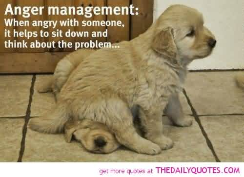 Animal Quotes Anger management when angry with someone it helps to sit down