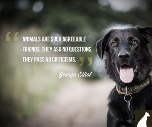 Animal Quotes Animals are such agreeable friends they ask no questions