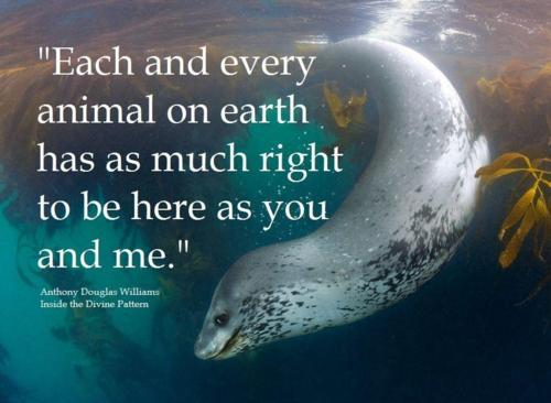 Animal Quotes Each and every animal on earth has as much right to be here as you and me