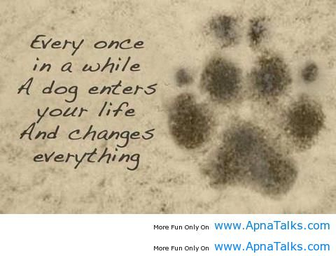 Animal Quotes Every once in a while a dog enters your life and changes everything