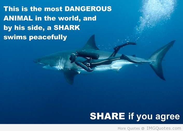 Animal Quotes This is the most dangerous animal in the world and by his side a shark