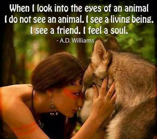 Animal Quotes When i look into the eyes of an animal i do not see an animal A.D. Williams