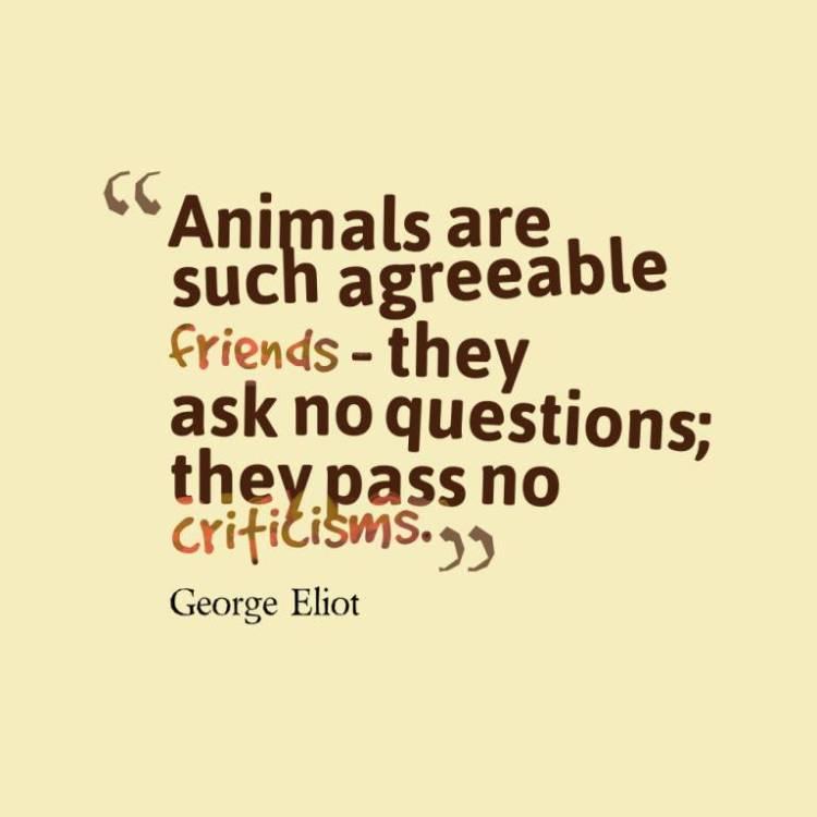Animal Quotes052