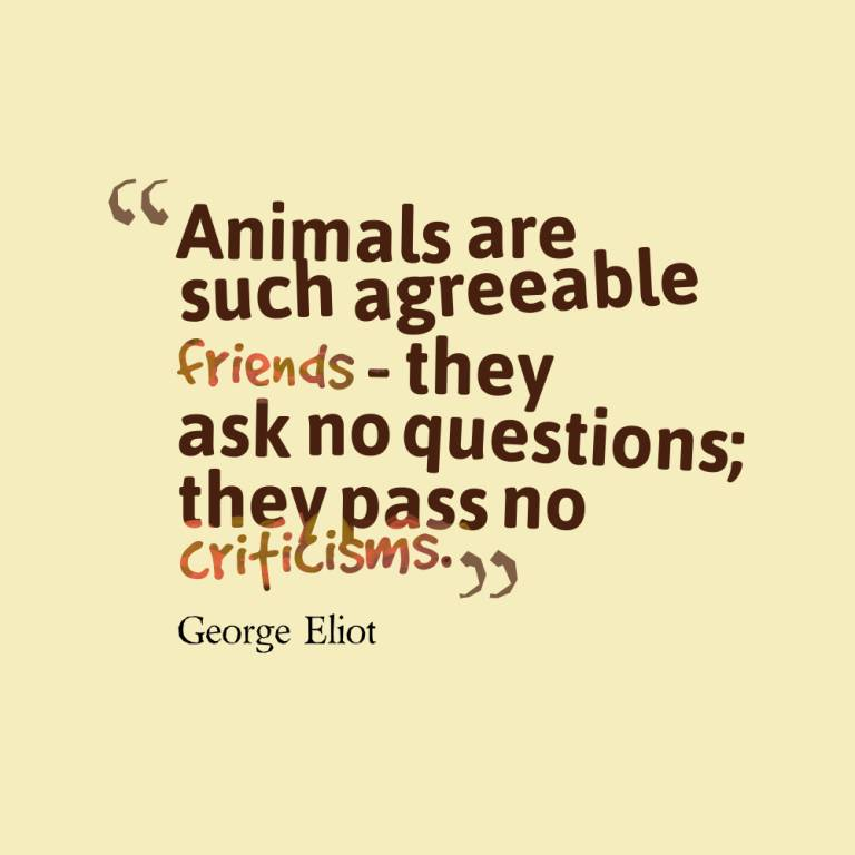 Animal Quotes052