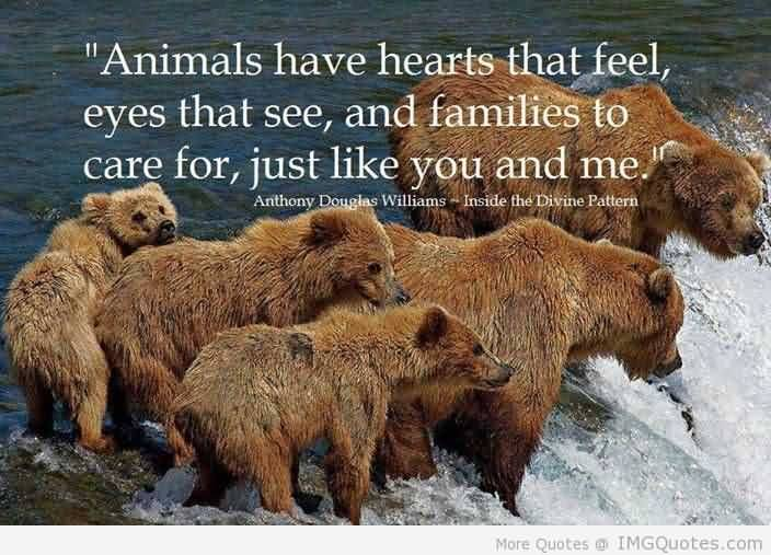 Animal Quotes0023