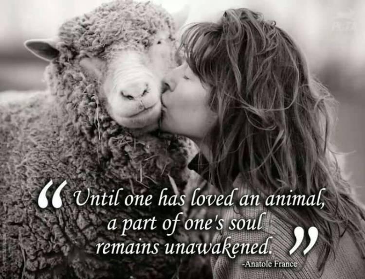 Animal Quotes019