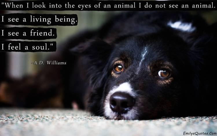 Animal Quotes001