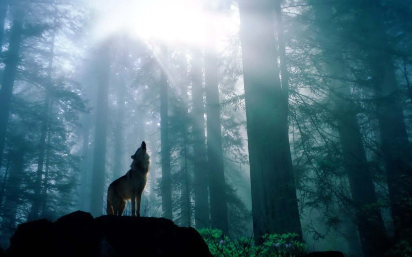 Awesome Fabulous Wolf In The Forest Full HD Wallpaper