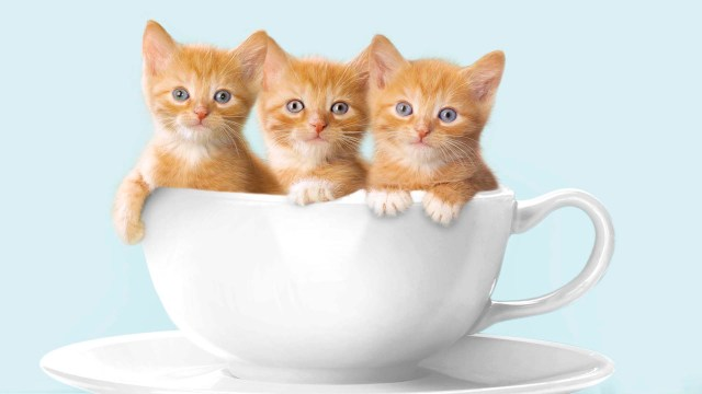 Awesome Three Beautiful Cats In A Cup Of Coffee 4K Wallpaper