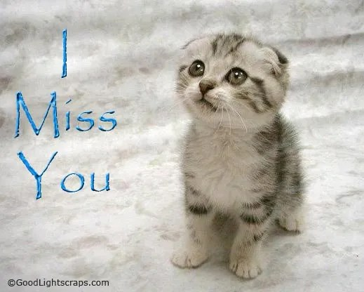 Cute Cat Wishes I Miss You Wallpaper