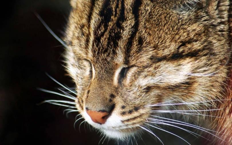 Fabulous Face Of A Beautiful Cat 4K wallpaper