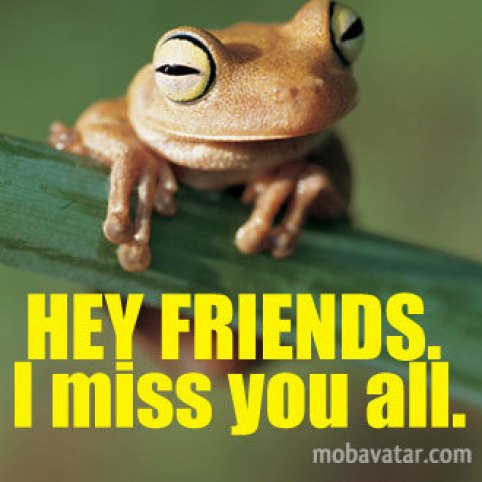 Funny Frog Hey Friends I Miss You All Picture
