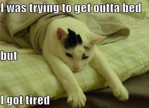 Funny Lazy Memes I Was Trying To Get Outta Bed But I Got Tired