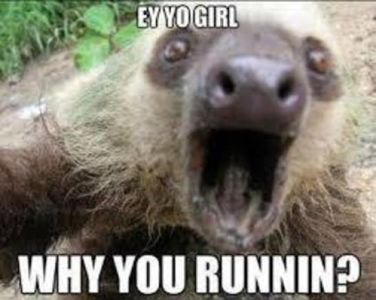 Funny Sloth Memes Ey yo girl why you runnin