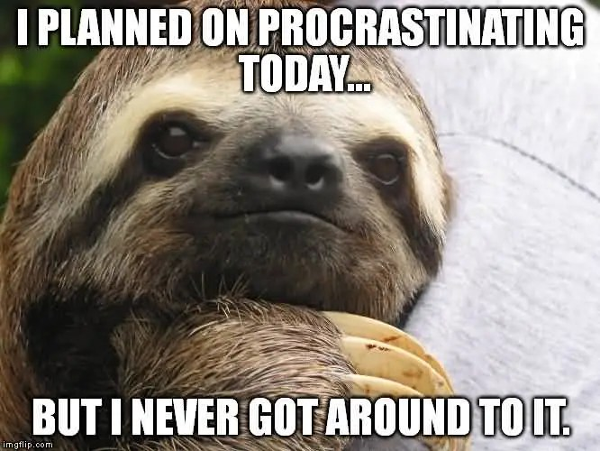Funny Sloth Memes I planned on procrastinating today