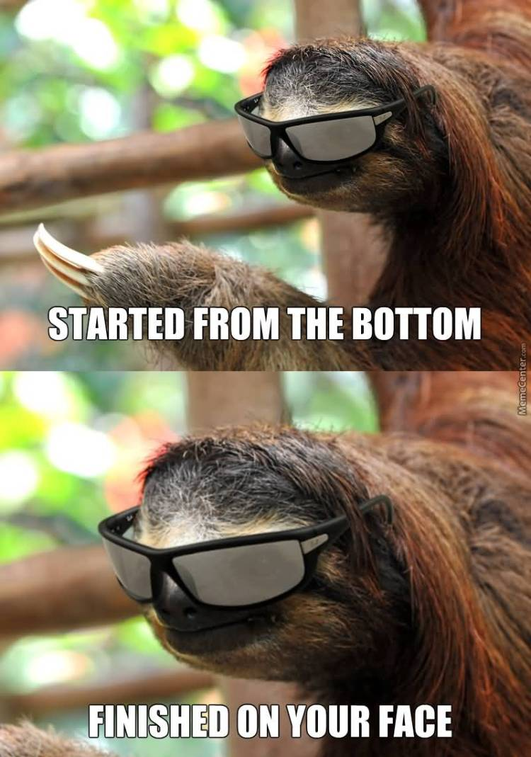 Funny Sloth Meme Started from the bottom finished on your face