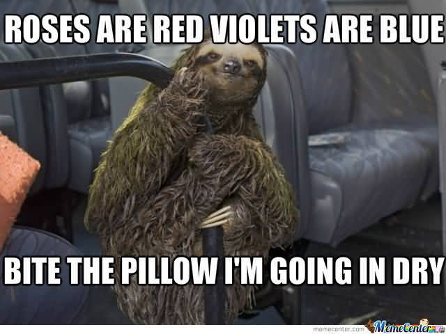 Funny Sloth Rape Memes Roses are red violets are blue bite the pillow i'm going in dry Photos