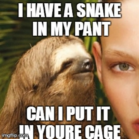 Funny Sloth Whisper Memes I have a snake in my pant can i put it