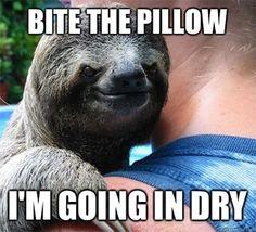 Sloth Meme Whisper Jalapeno