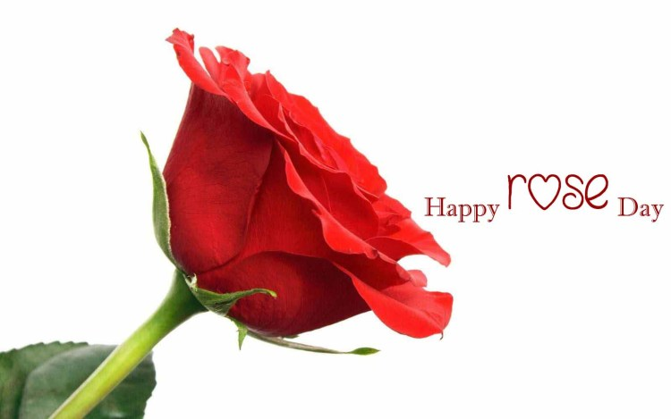 Happy Rose Day Wishes For Lover