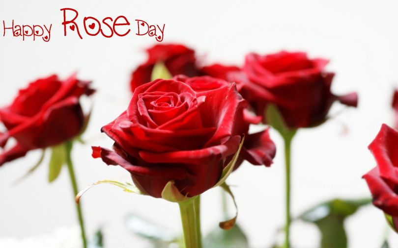 Happy Rose Wishes Picture