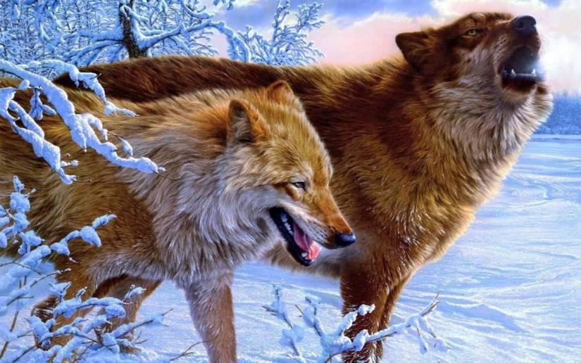 Horrifying graphic Wolves full HD wallpaper