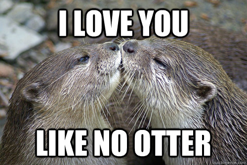 I Love You Like No Otter Funny Meme