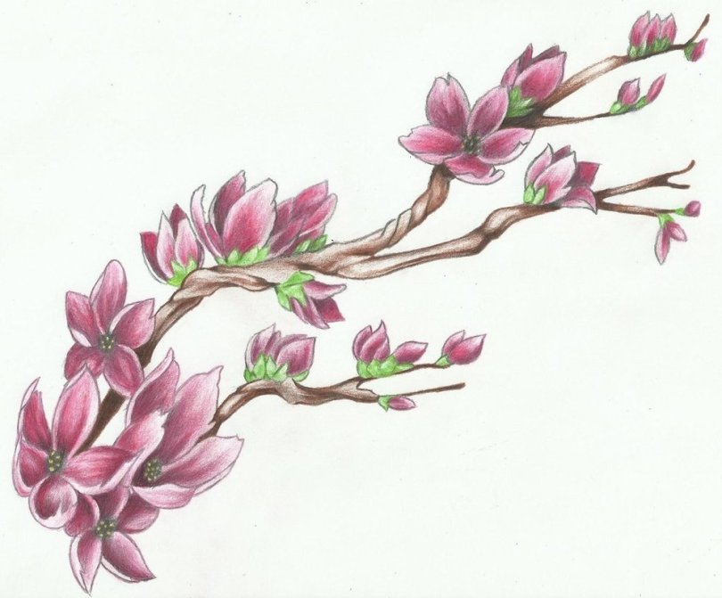 Latest Green Black And Red Color Ink Cherry Blossom Tattoo Design For Girls