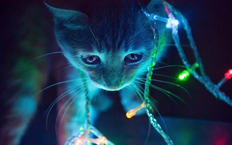 Most Awesome Desktop Background For A Cat Full HD Wallpaper