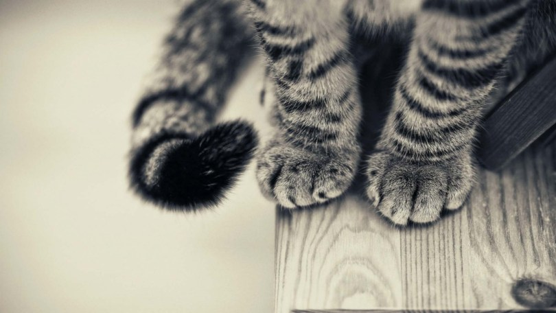 Most Beautiful Cat Feet Full HD Wallpaper