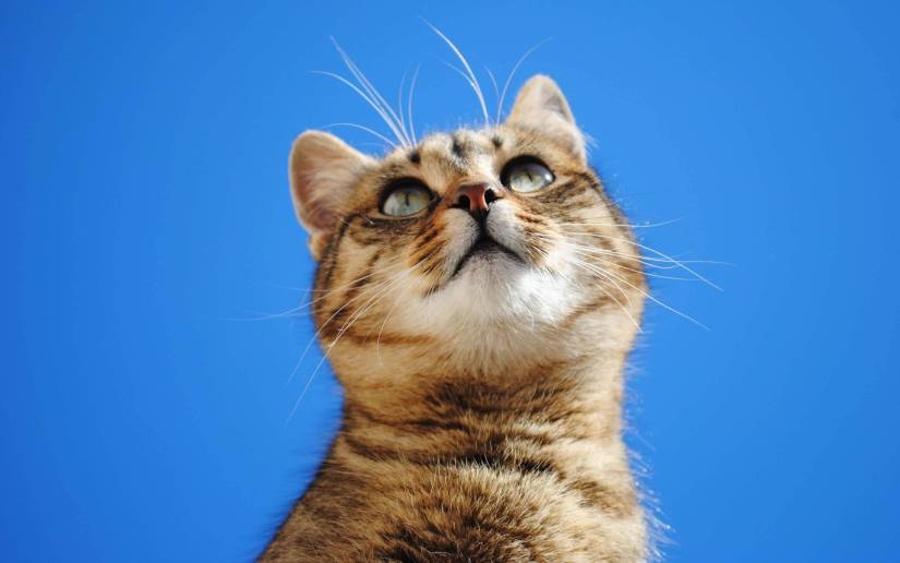 Most Beautiful Cat With Blue Sky 4K Wallpaper
