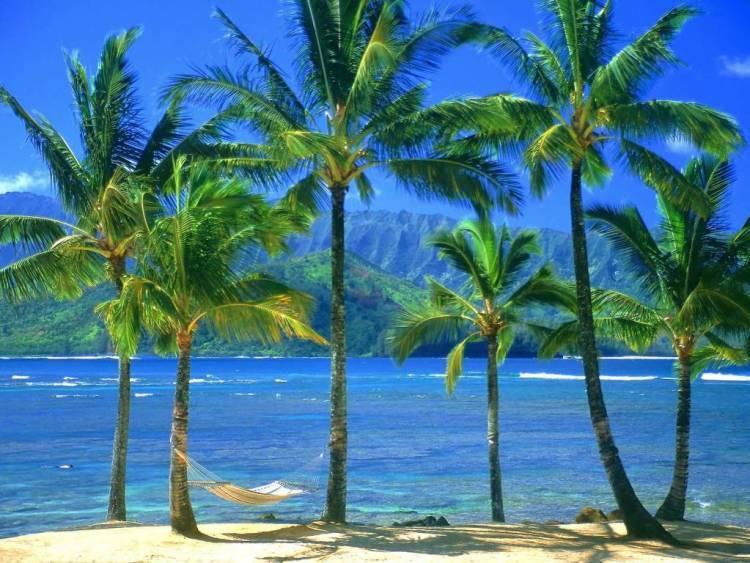 Most Dashing An Empty Hammock Kauai Hawaii Full HD Wallpaper