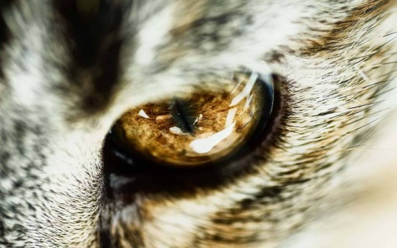 Most Wonderful Big And Powerful Animal Eye Full HD Wallpaper