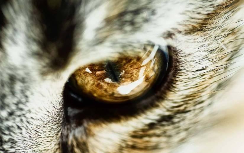 Most Wonderful Big And Powerful Animal Eye Full HD Wallpaper