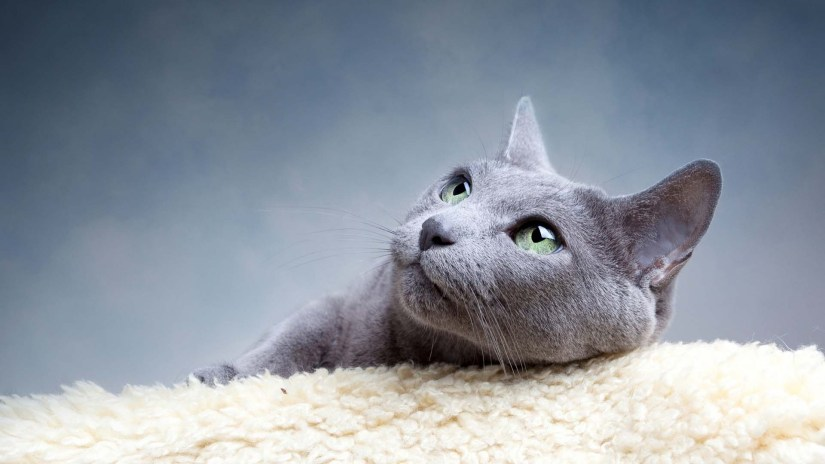 Most Wonderful Cat Leaning On The Pillow 4K Wallpaper