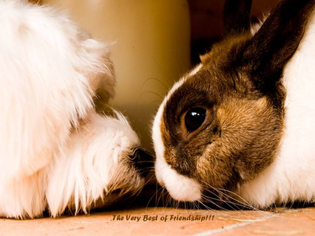 The Very Best Of Friendship Wallpaper