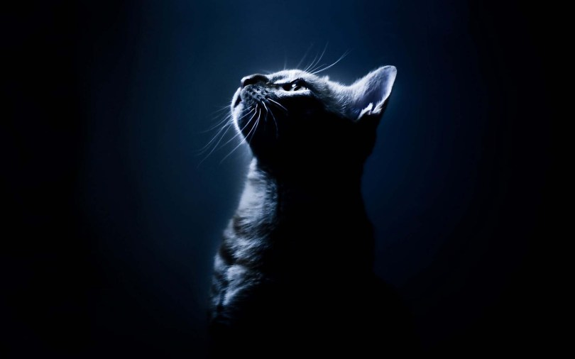 Very Fantastic Cat Looking Forward To Light 4K Wallpaper