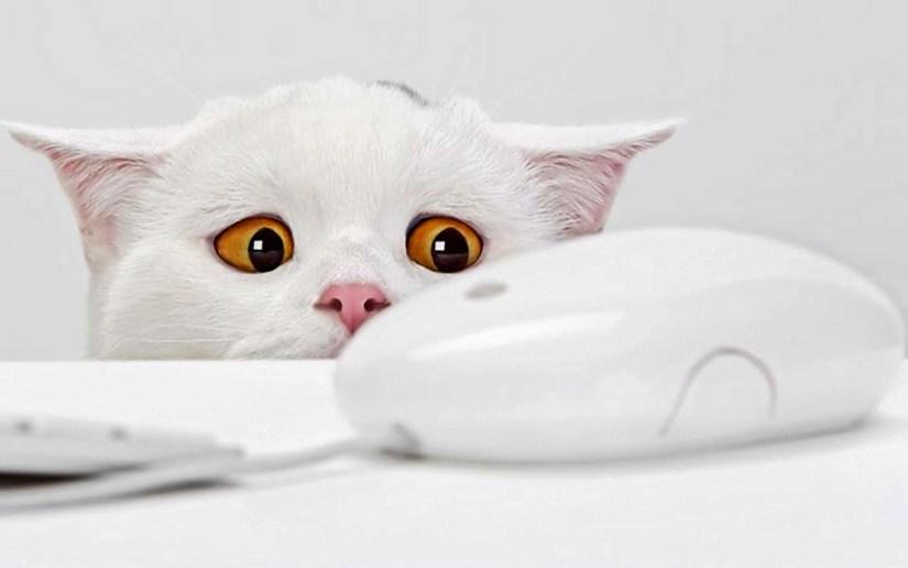 Wonderful Cat Seen A Computer Mouse 4K Wallpaper