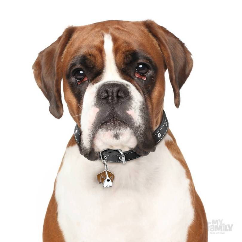 Amazing Brown And White Boxer Dog With Black Eye