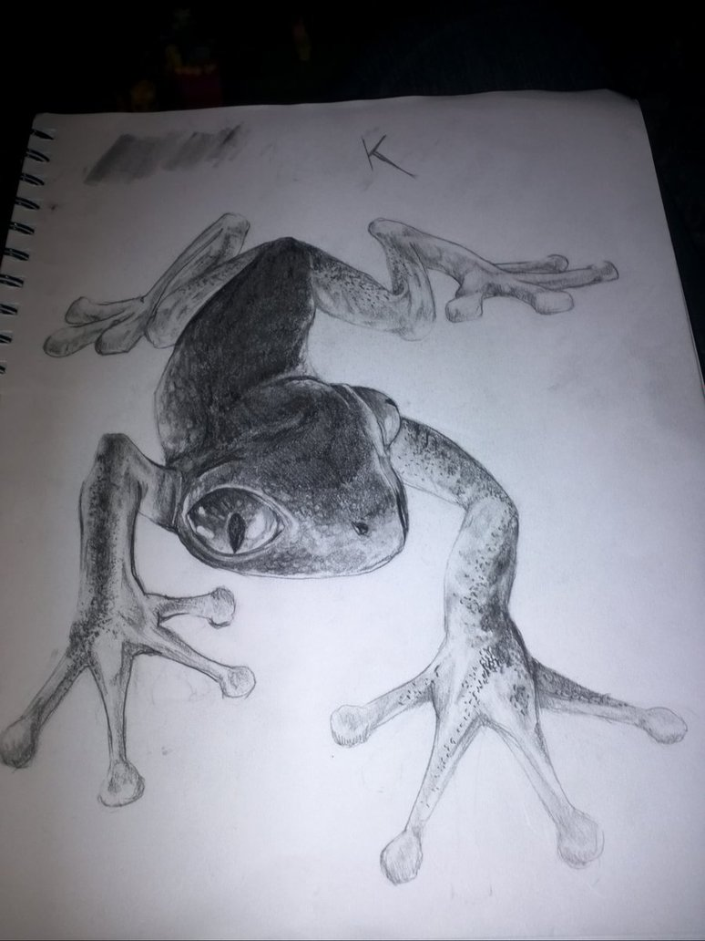 Amazing Frog Tattoo Drawing For Tattoo Fans
