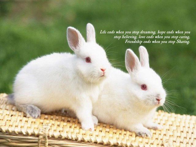 Best Wishes Happy Friendship Day