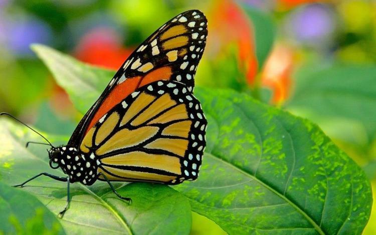 Butterfly Looks Great Sitting On Leaf Birds Wallpaper