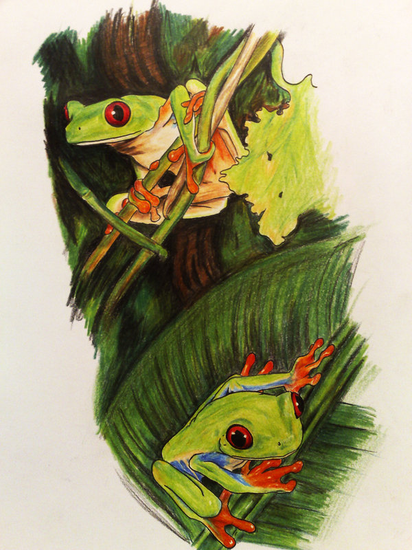 Custom Red Eye Tree Frog Tattoo Designs For Boys