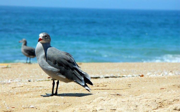Cutest Bird Watching Toward Camera
