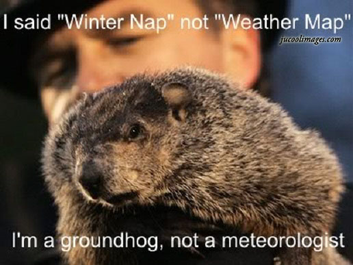 Everyone Happy Groundhog Day Wishes