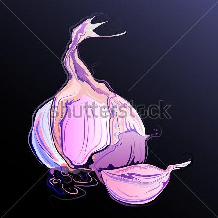 Fantastic Stock Vector Garlic Tattoo Design For Girls