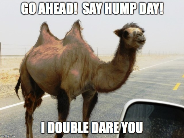 Go a Head Say Hump Day I Double Dare You Meme Photo