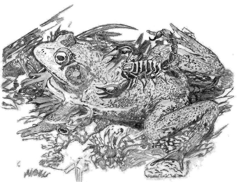 Great Frog Scorpion Tattoo Drawing For Girls