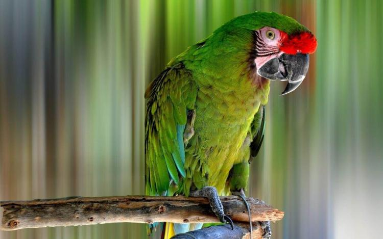 Green Color Parrot Sitting On Tree LOOks Cute